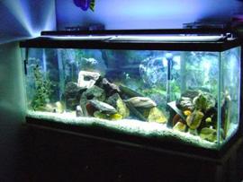LED strip lighting for aquarium water tank
